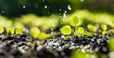 Curso de Experto en Medio Ambiente